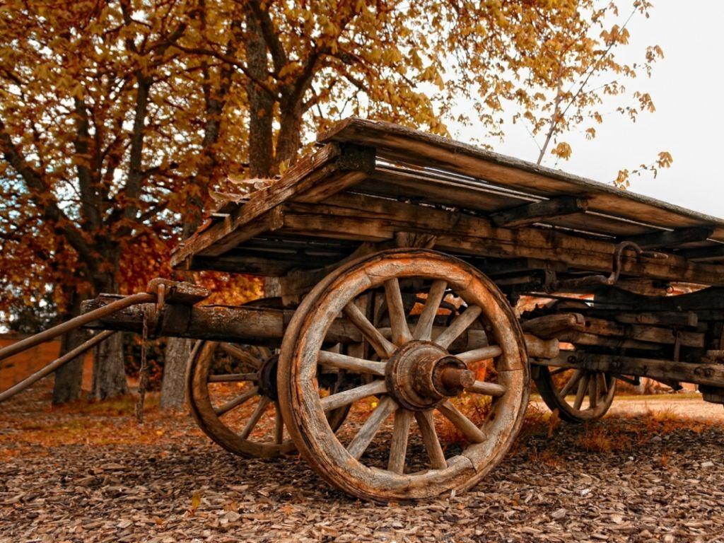 wood cart، پاییز، گاری، چوبی، درختی، طبیعت
