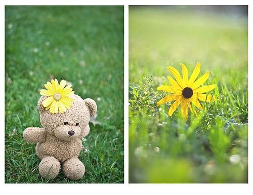 خرس، گل زرد، ناز،